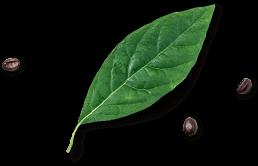 Leaf Footer Image